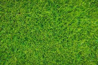 Imagen de primer plano de la hierba verde fresca de primavera.