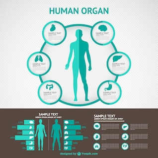 Infografía de cuerpo humano