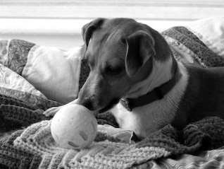 Jack Russell, Russell