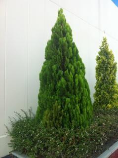 Jard n japon s y koi descargar fotos gratis for Arboles jardin japones