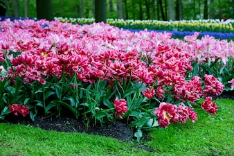 Jardín con rosas