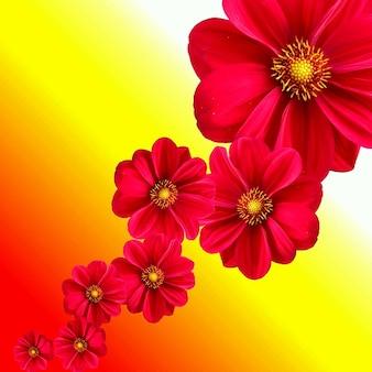 Jardín de flores de dalia planta
