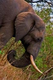 kruger parque elefante fauna
