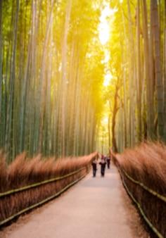 KYOTO, JAPÓN - el 12 de noviembre: La trayectoria al bosque del bambú en Kyoto, Japón en noviembre de 2015. Kyoto es uno del destino turístico más famoso de Japón.