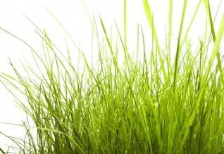la hierba al aire libre