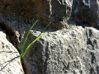 la hierba entre las rocas