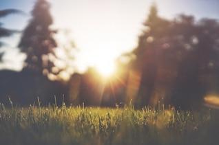 La hierba verde y la puesta de sol