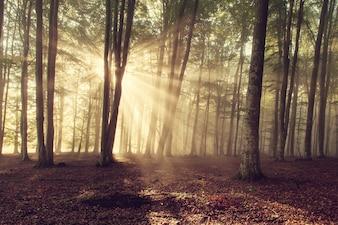 La luz del sol en el bosque