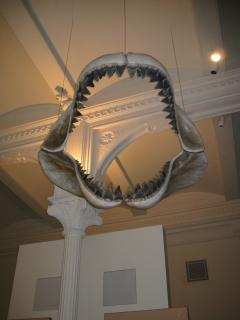 La mandíbula de dinosaurio gigante