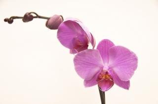 la naturaleza de orquídeas,