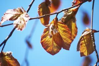 la naturaleza de verano, las hojas