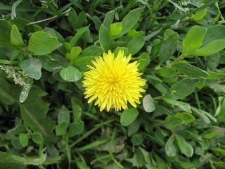 la primavera, la hierba