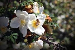 La primavera está llegando