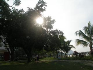 Palmas jard n descargar fotos gratis - El jardin del sol ...