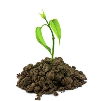 La suciedad ecología planta resorte suelo