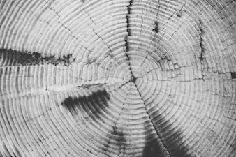 La textura de la madera