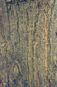 La textura de la naturaleza rebanada marrón de edad