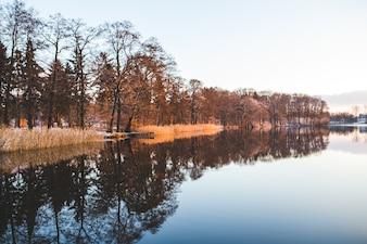 Lago con árboles