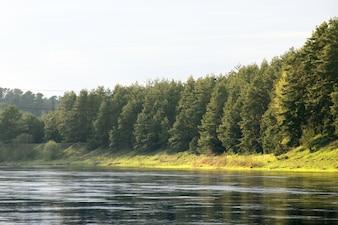 Lago y árboles