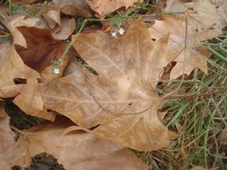 las hojas de otoño bosque
