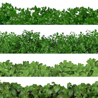 Las hojas de plantas diferentes