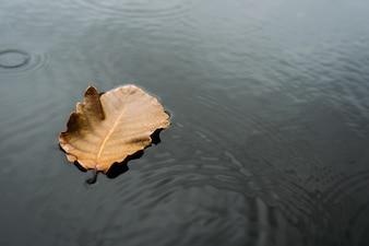 Las hojas flotan en el agua