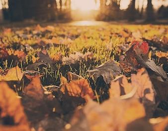 Las hojas otoñales