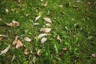 Las hojas secas caídas sobre la hierba verde