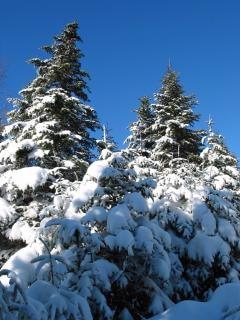 Las maravillas del invierno nieve