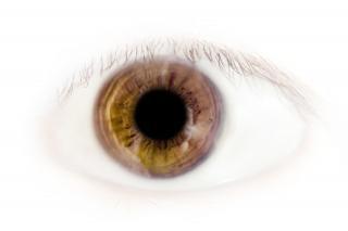 Las pestañas de los ojos macro
