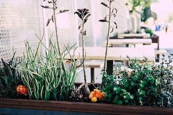 Las plantas en el jardín