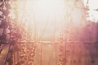 Las plantas en la puesta de sol