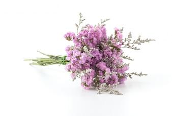 Lavanda púrpura decoración flor flor