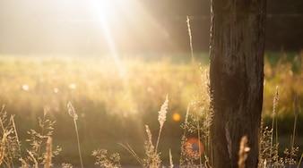 Los rayos del sol en el campo