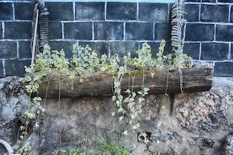 Maceta con plantas en un tronco colgado por cuerdas
