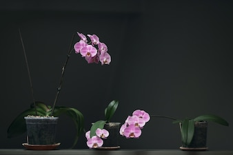 Macetas con flores lilas