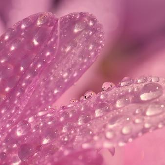 Macro foto de gotas en la flor. Hermoso fondo borroso rosa natural.