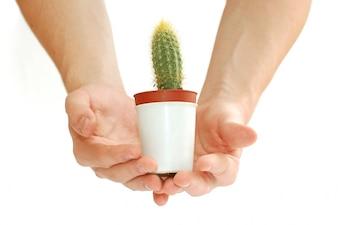 Mano con un cactus