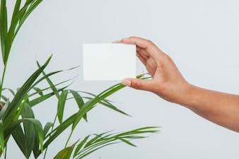 Mano sosteniendo tarjeta de visita con planta al fondo