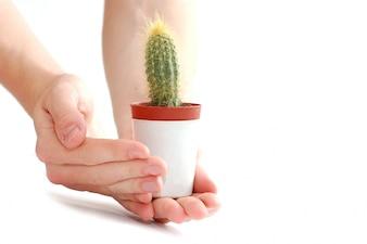 Manos con un cactus en una maceta