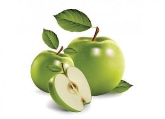 Manzanas realista - vector Fruta fresca