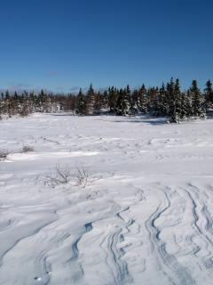 Maravillas del invierno los bosques naturales