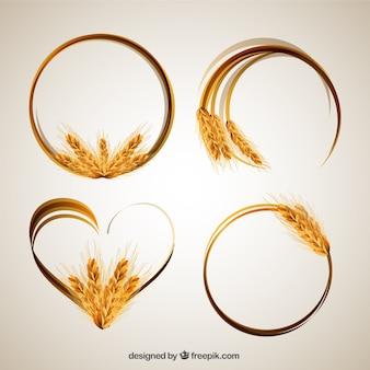 Marcos de espigas de trigo