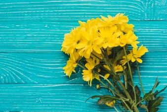 Margaritas amarillas sobre fondo de madera azul