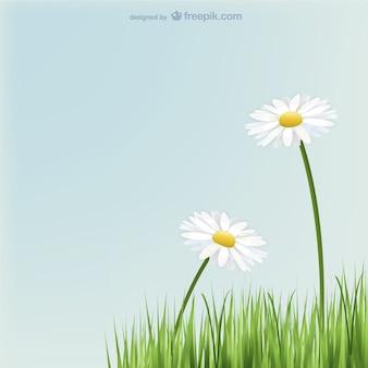 Margaritas flores con hierba