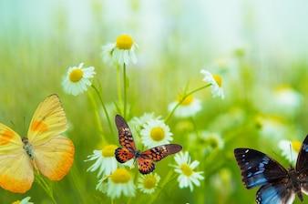 Mariposa sobre margarita