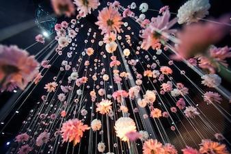 Mira desde abajo a crisantemos rosados colgando del techo negro
