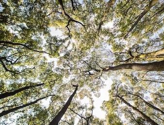Mirando para arriba las tapas amarillas, anaranjadas, y verdes de árboles.