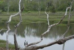místico pantano