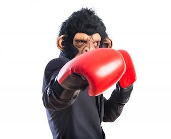 Mono hombre con guantes de boxeo